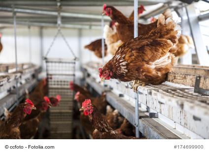 Mobilstall für Hühner, mobiler Hühnerstall